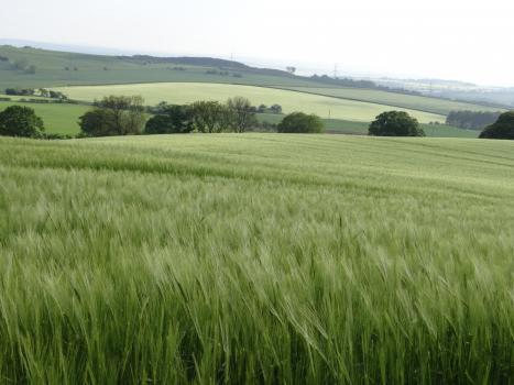 Farmfields
