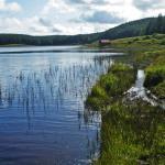 Slender Naiad Loch