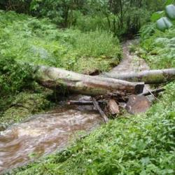 Log structure in stream